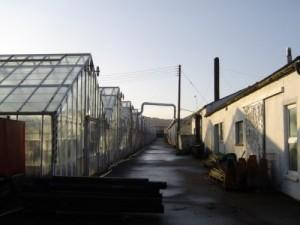 Rylands Nurseries Wellington